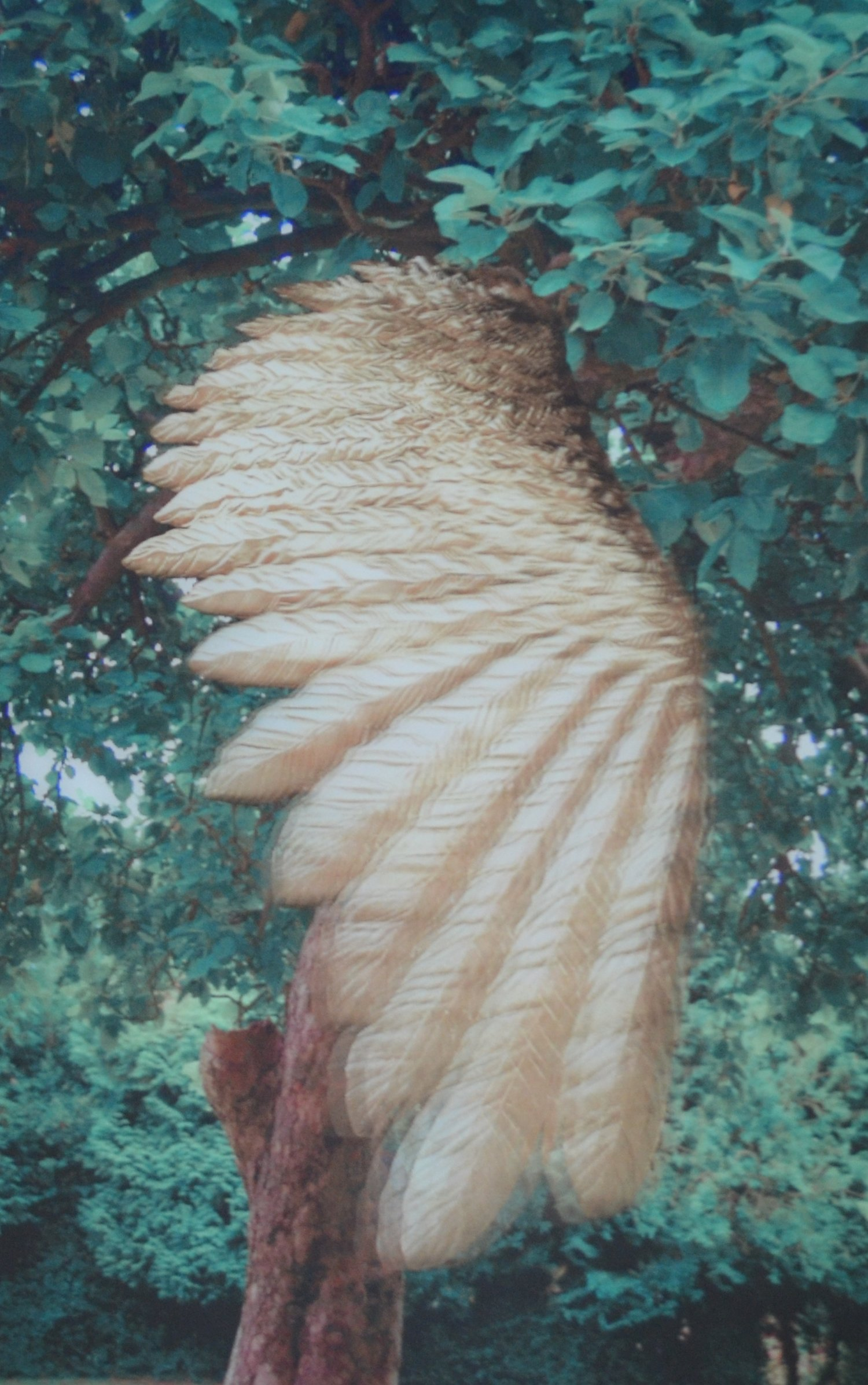 Lenticular print of a wing titled,  The Fall  by Wayne Warren