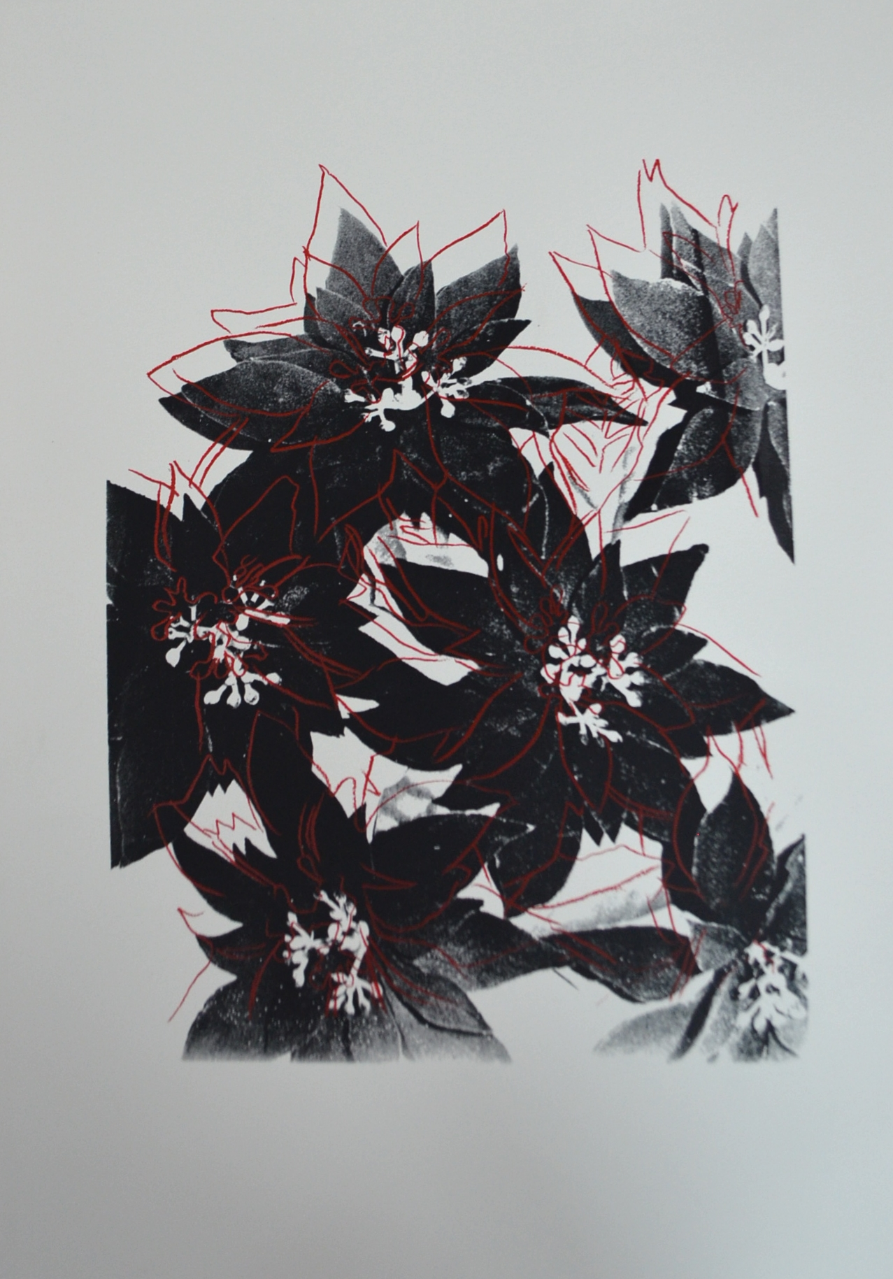 andy warhol's black and red poinsettias