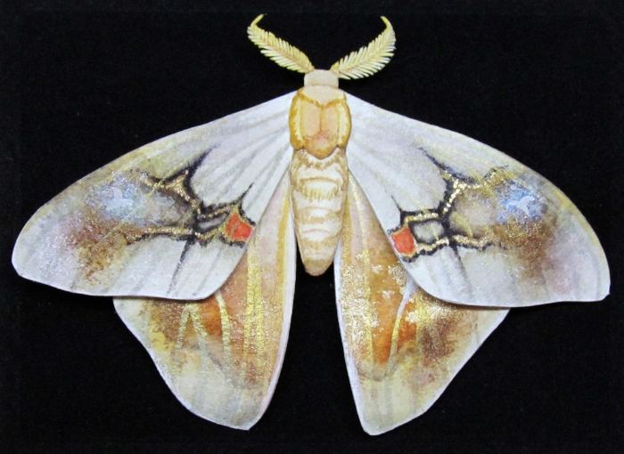 painted_moth.jpg