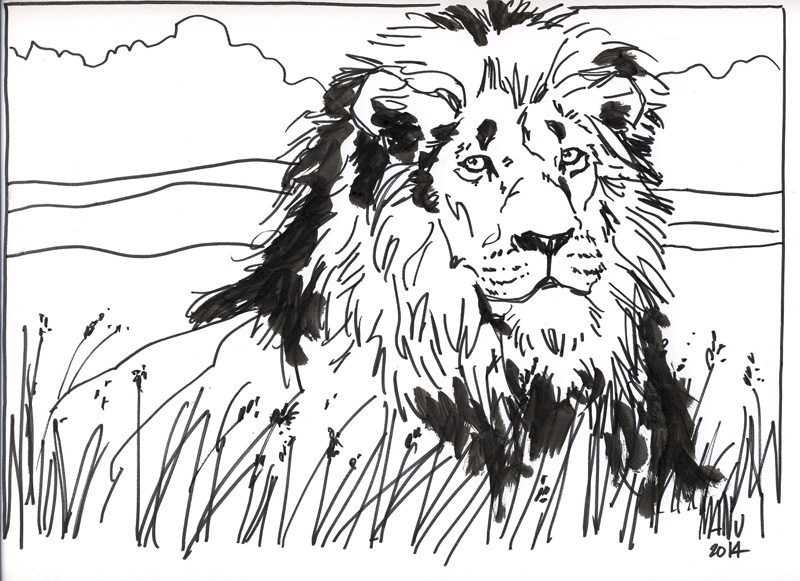 webmale lion laying.jpg