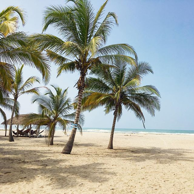 Another coconut-tastic-day in #Colombia 🌴🇨🇴 #travel #wonderlust #travelphotography #travelblogger #traveller #travelpictures_world #travelersnotebook #traveling #travels #ocean #photography #travelphotography #carribean #carribeansea #carribeanstyle #southamerica #beach #beachlife  #travelgram #exotic #palmtrees #hammock #instatravel #paradise #worldtraveler #worldtravel #worldphotography #expedia @expedia @colombia.travel
