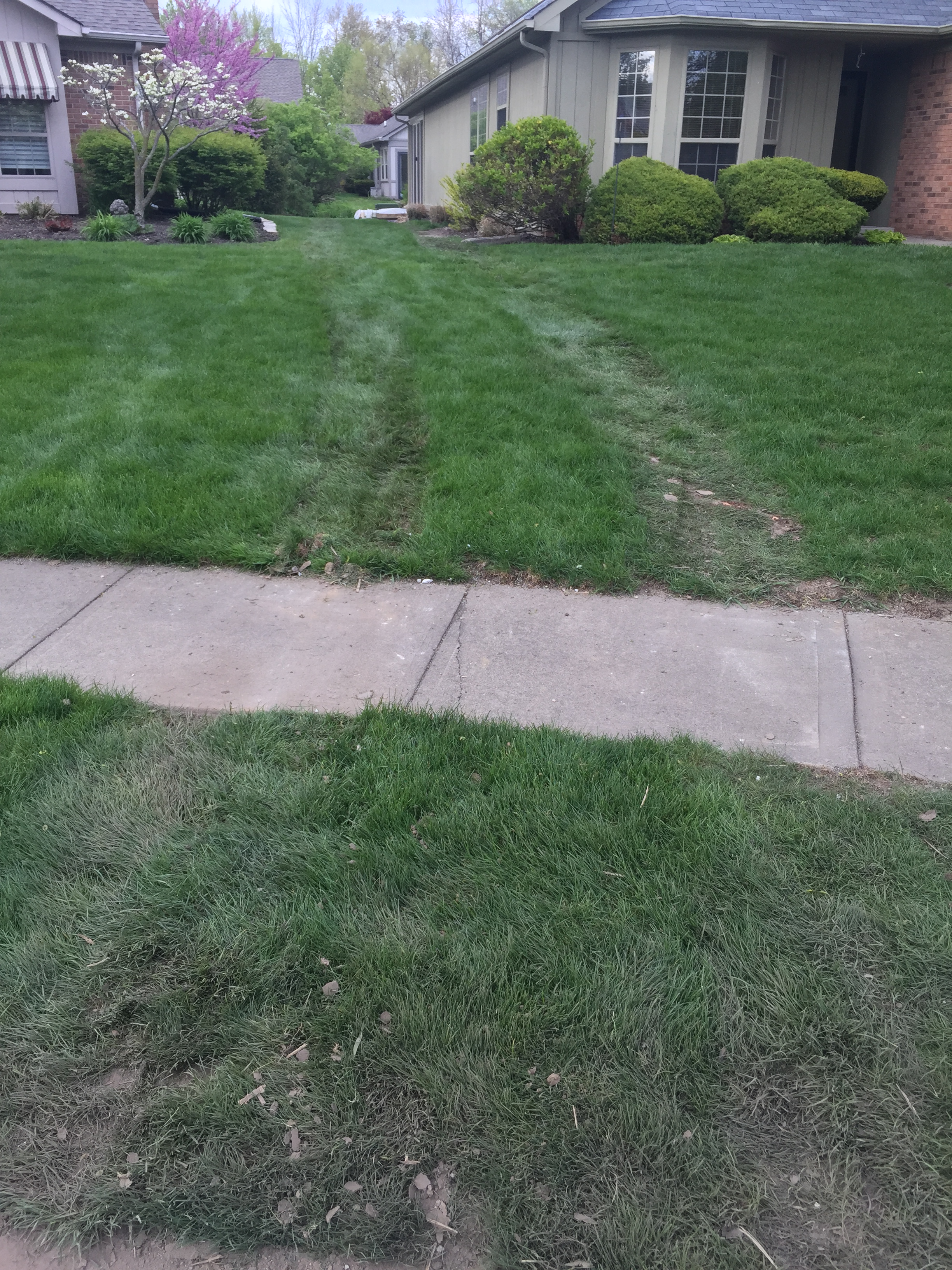 Tracks in yard...