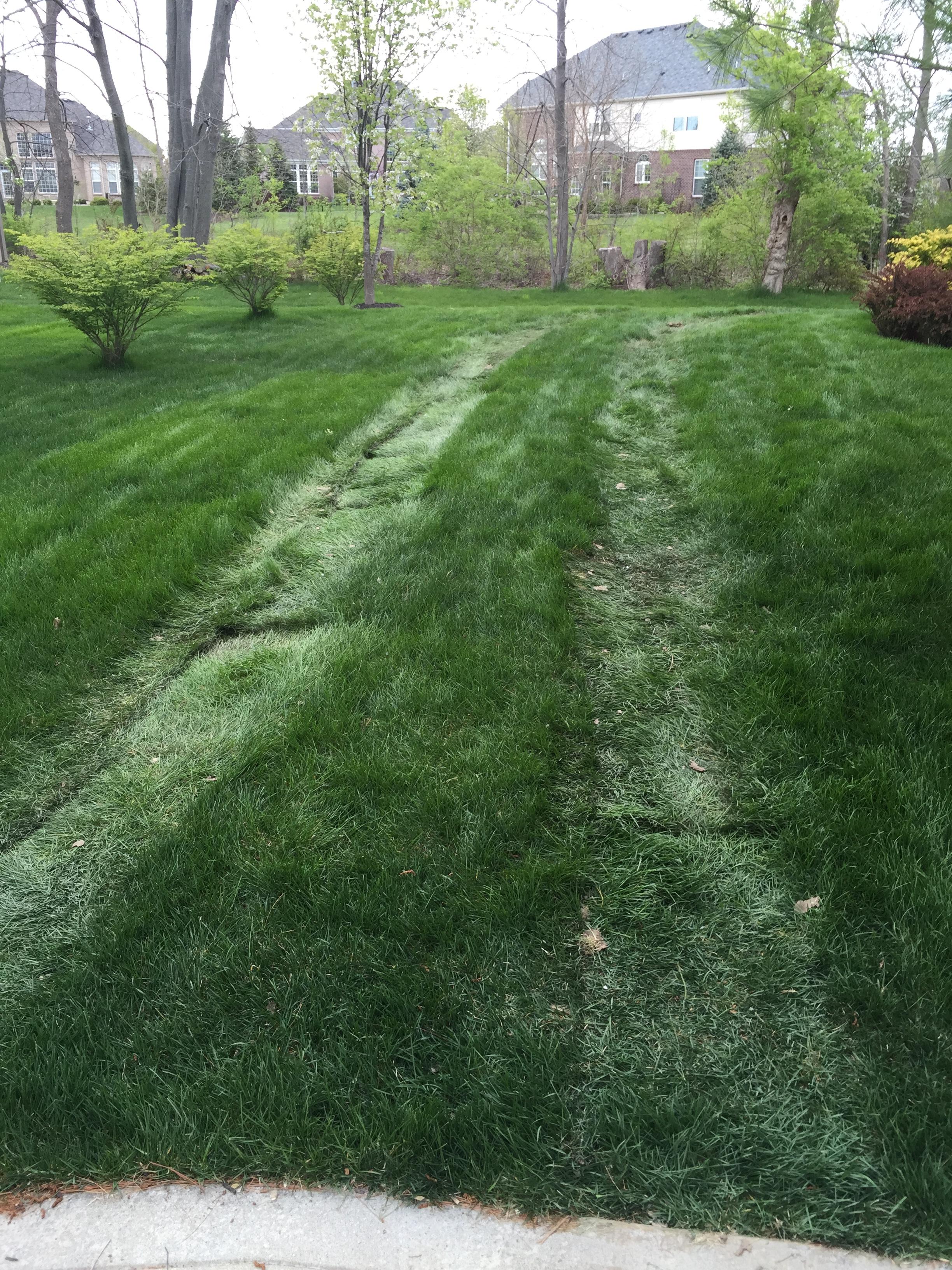 Tracks in yard.