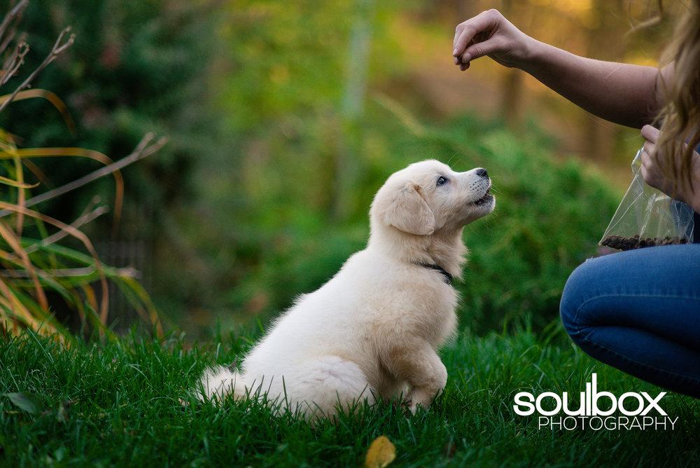 Soulbox Photography Pet Photography