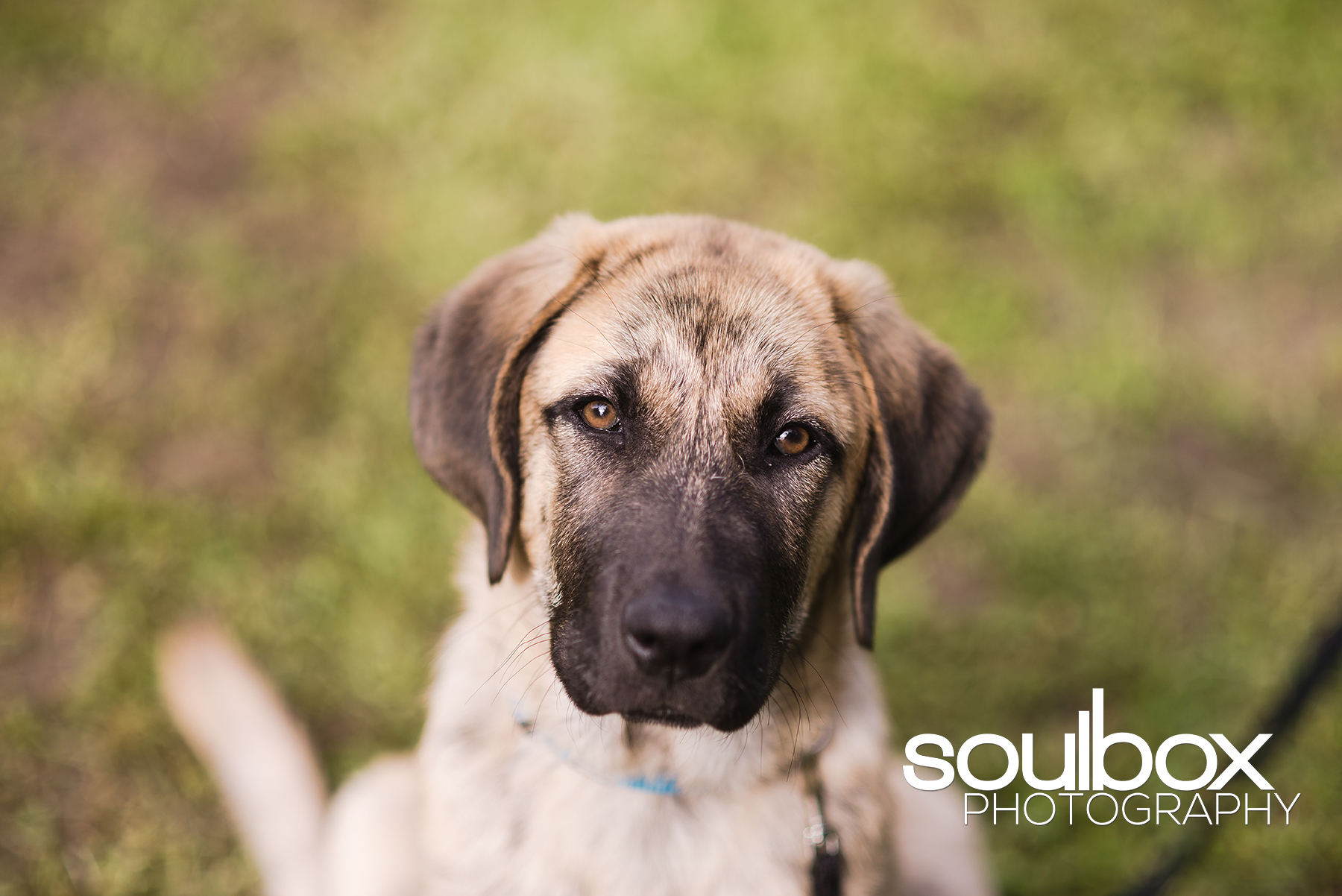Soulbox Photography Pet Photography Red Deer