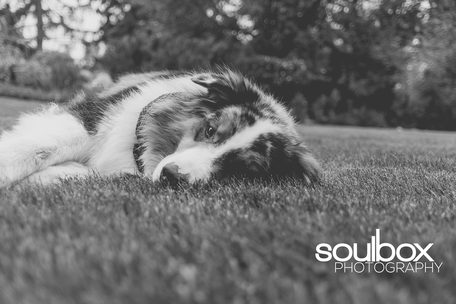 SoulboxPhotographyPetPhotography-2.jpg