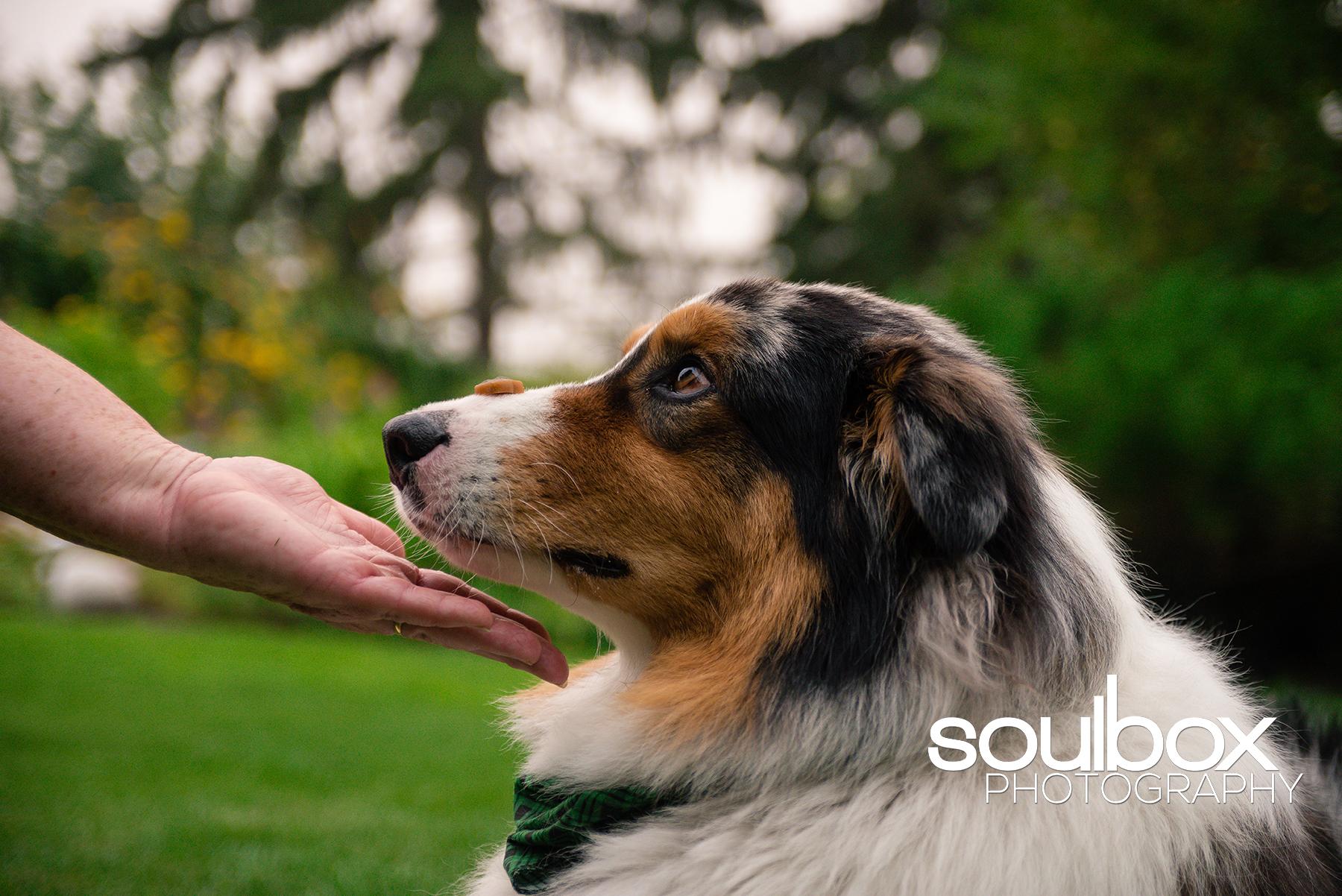 SoulboxPhotographyPetPhotography-1.jpg