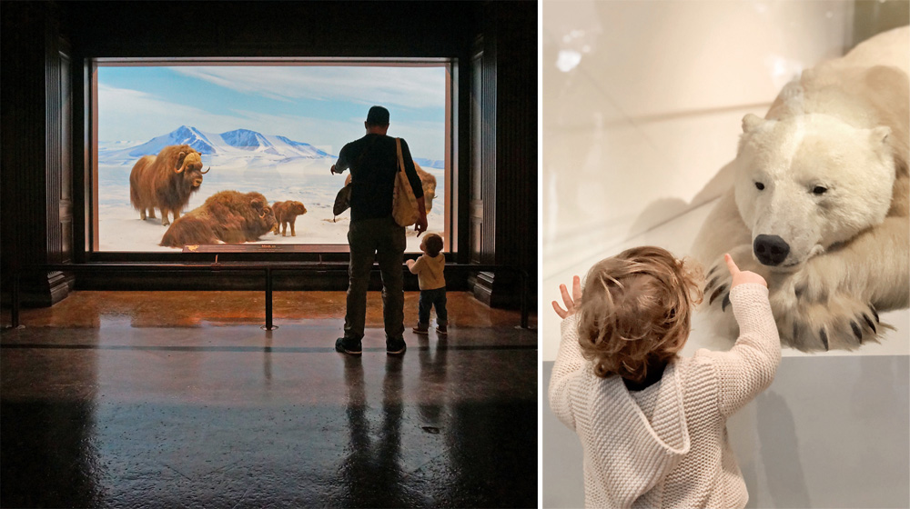 Above: Enjoying the beautiful installations at the  Natural History Museum of Los Angeles .