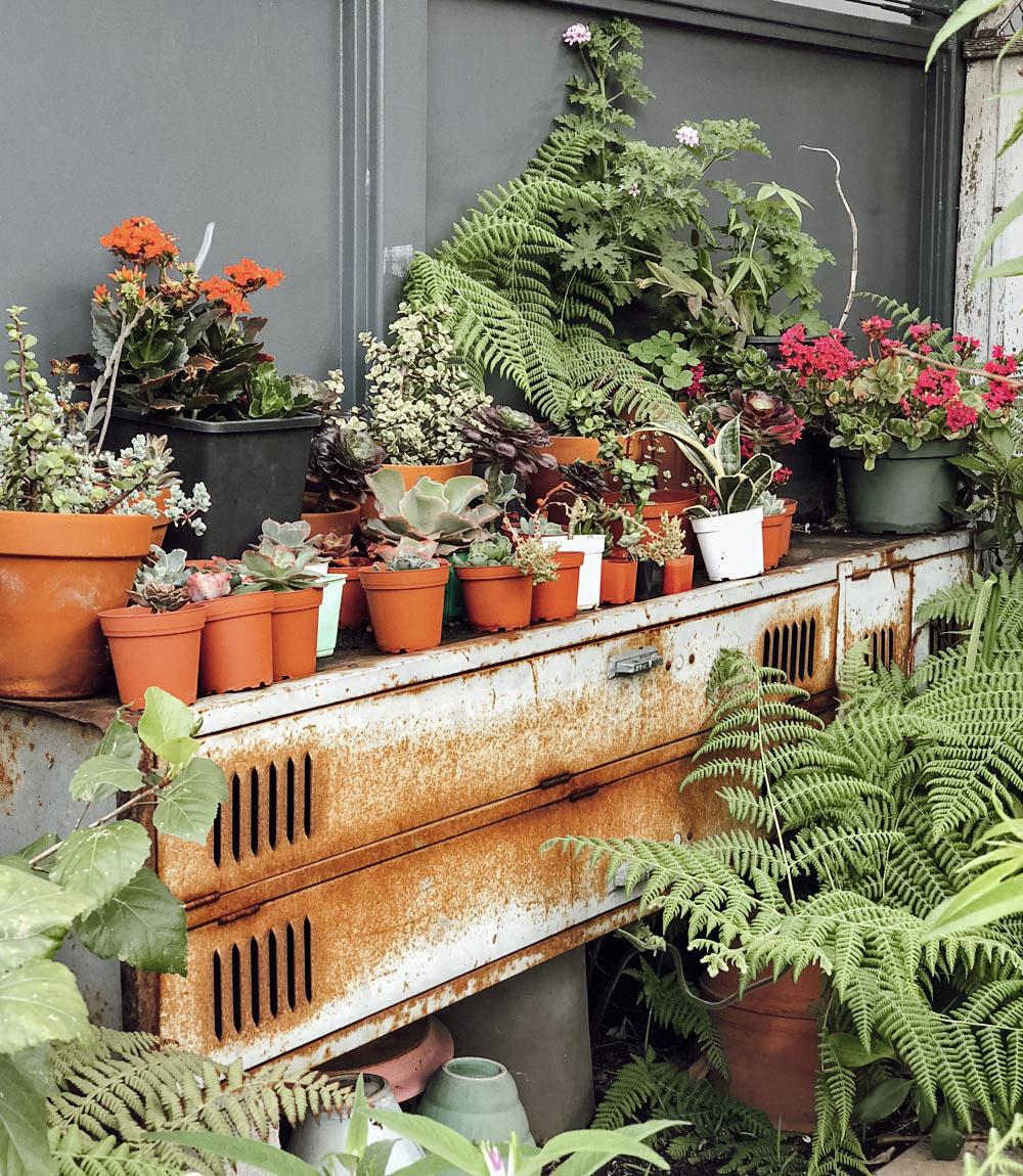 blog_plants.jpg