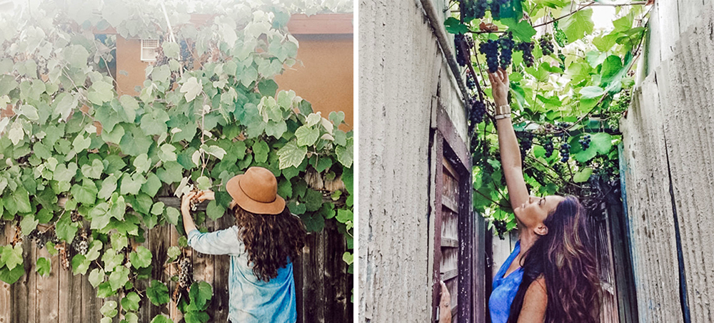 Left: Clipping the grapes in 2014. Photo by  Monica Wang . Right: Picking fruit between our home and the neighbor's. Photo by Lily Diamond of  Kale & Caramel .