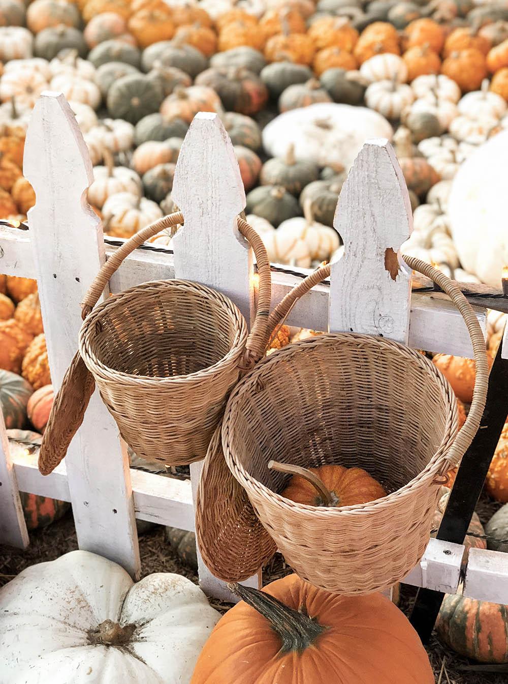 pumpkinbaskets.jpg