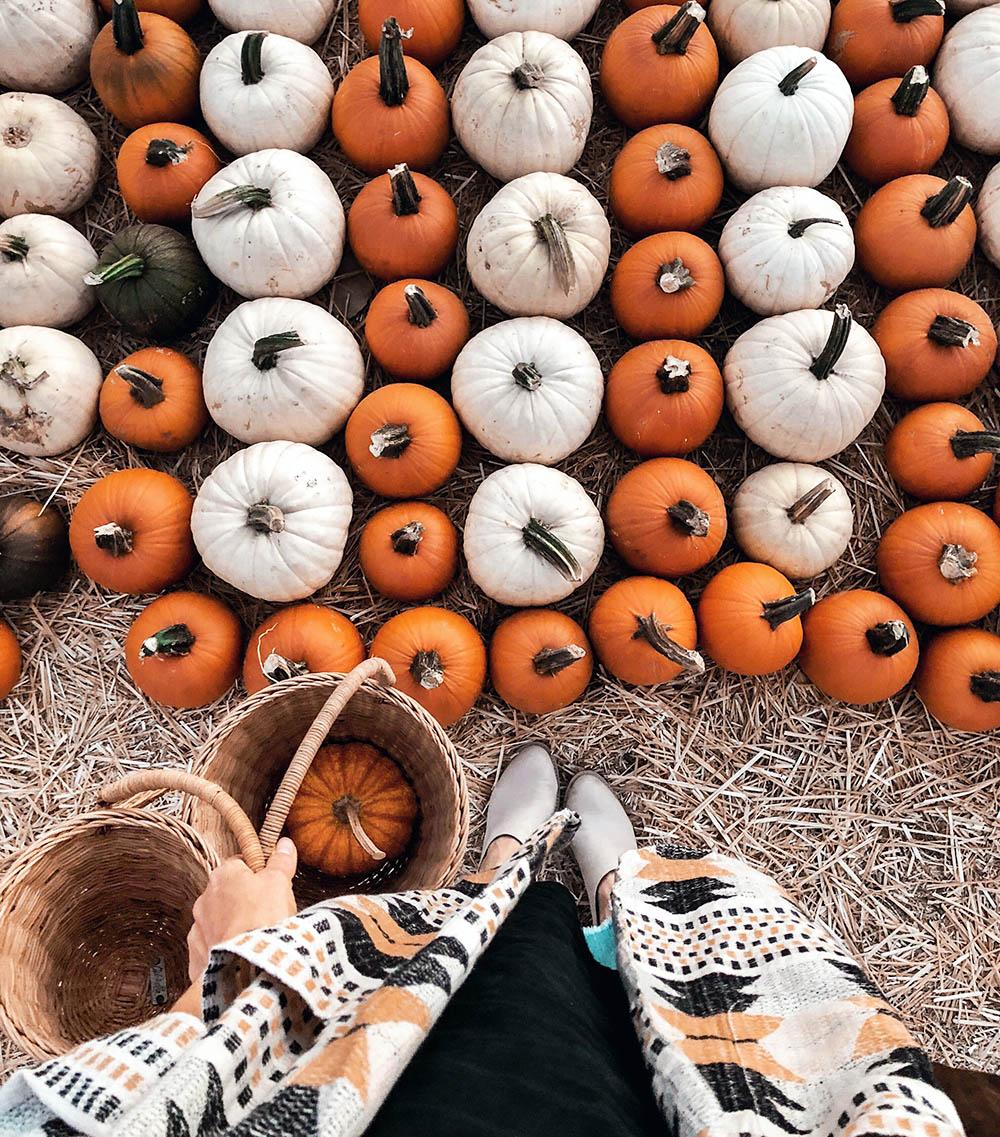 pumpkinpatch_fromwhereistand.jpg
