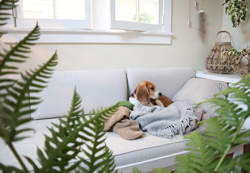 blog_tinyhousebeagle_builtinsofa.jpg