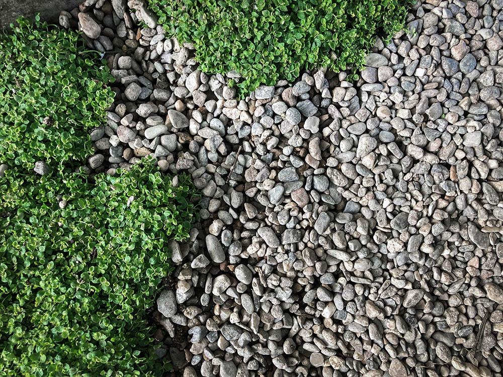 gravel_groundcover.jpg
