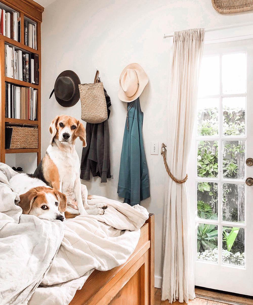 tinycanalcottage_dogs.jpg