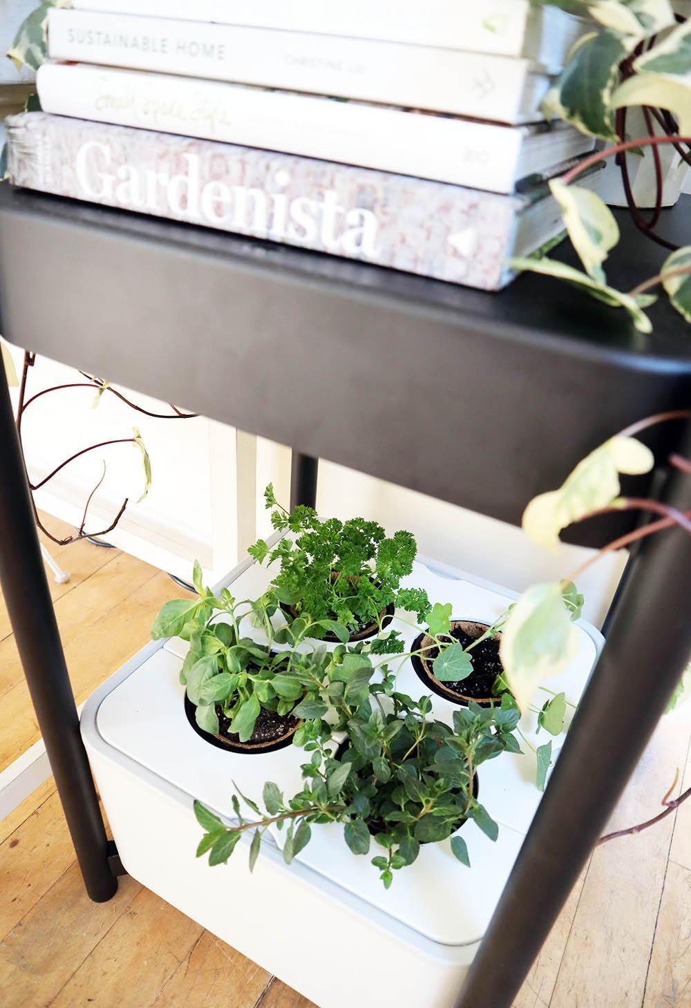 smallspace_garden_indoors.jpg