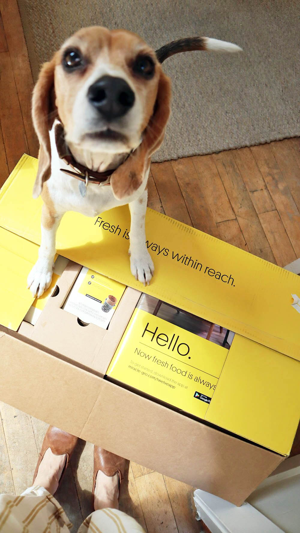 smallspace_beagle.jpg