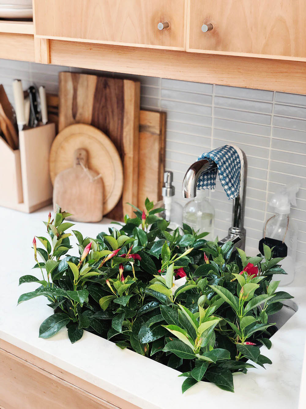 smallspace_kitchen_plants.jpg