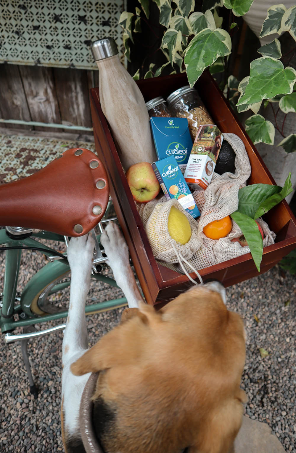 beagle_bike_basket.jpg
