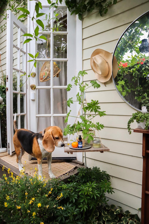 tinyhouse_beagle.jpg