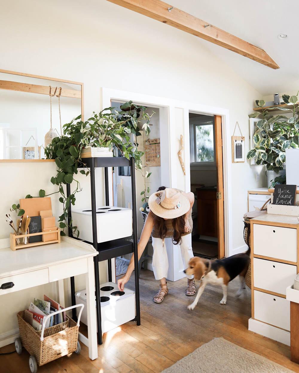 indoor_small_space_gardening_9.jpg