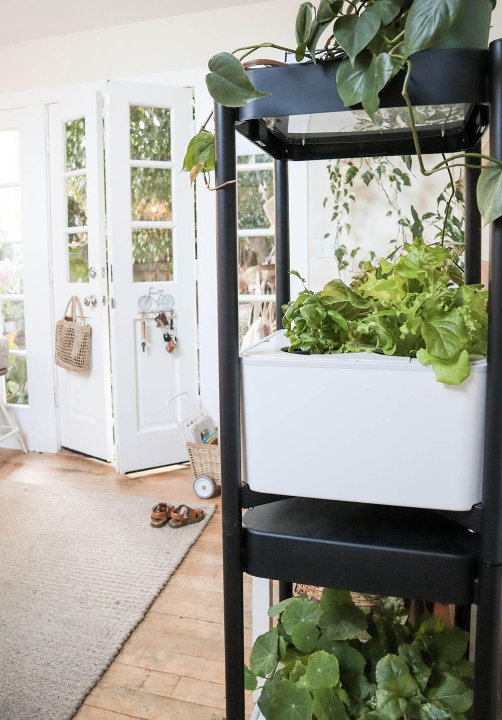indoor_small_space_gardening_6.jpg