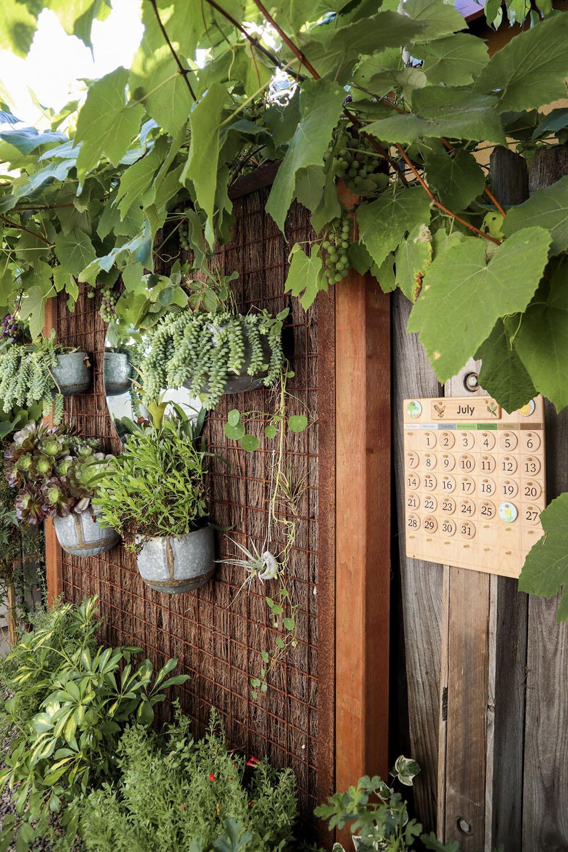 indoor_small_space_gardening_10.jpg