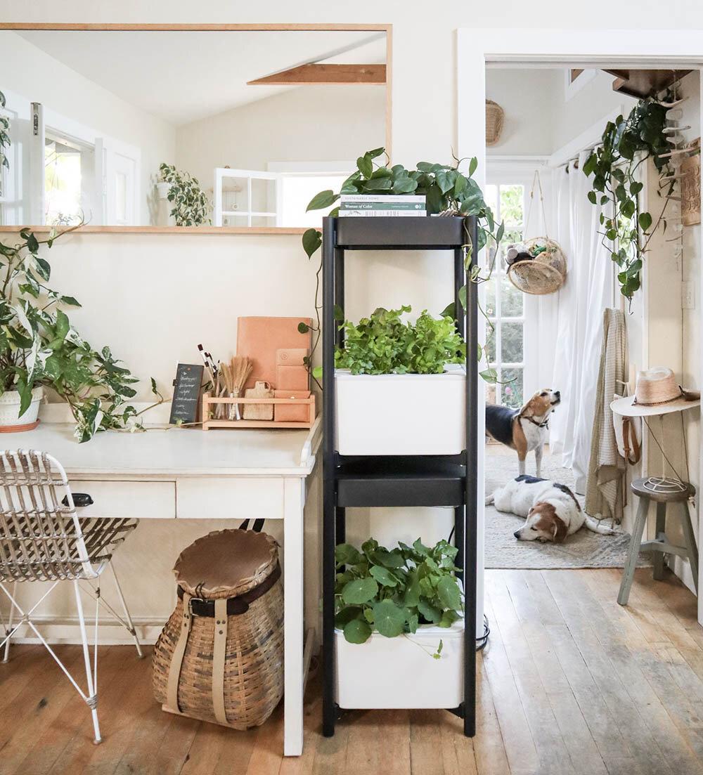 indoor_small_space_gardening_8.jpg