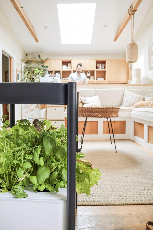 indoor_small_space_gardening_23.jpg