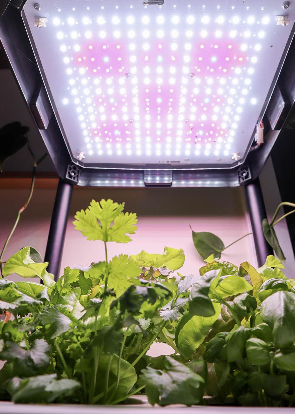 indoor_small_space_gardening_4.jpg