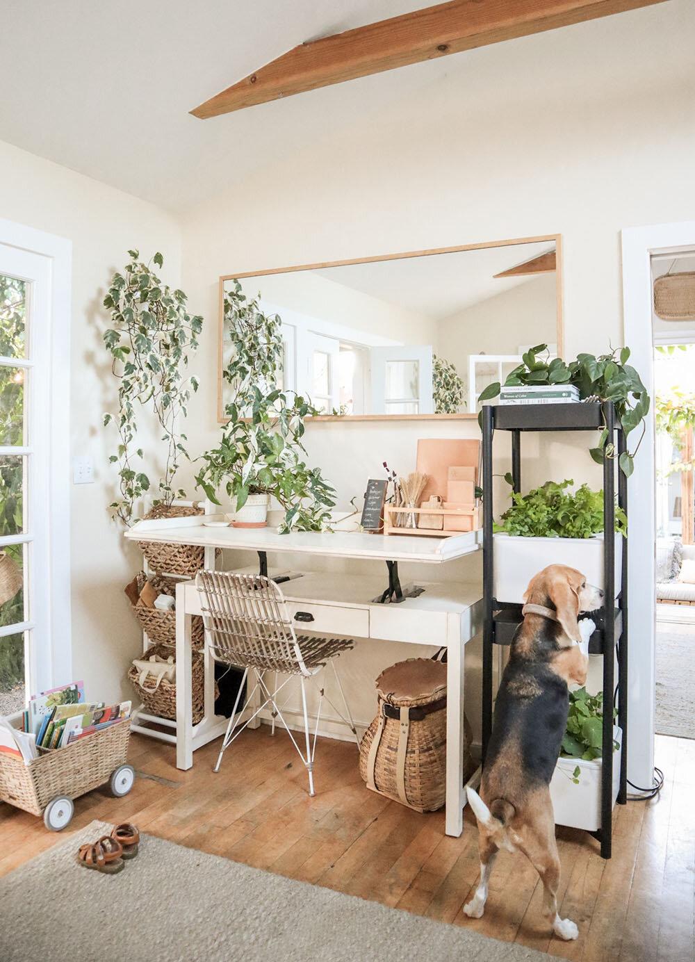 indoor_small_space_gardening_30.jpg