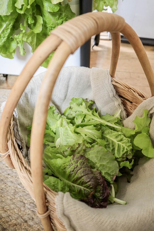 indoor_small_space_gardening_20.jpg