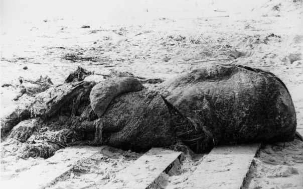 St. Augustine carcass - memorable globster from https://en.wikipedia.org/wiki/Globster#/media/File:St_augustine_carcass.jpg