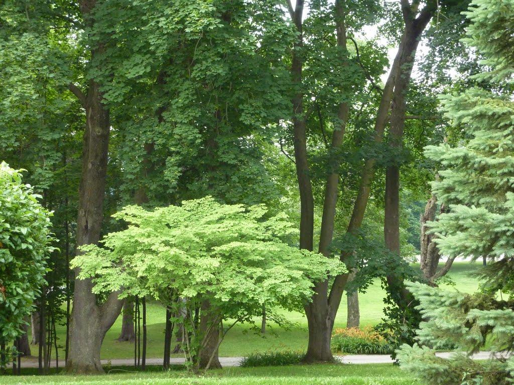 Westover garden 2.jpg