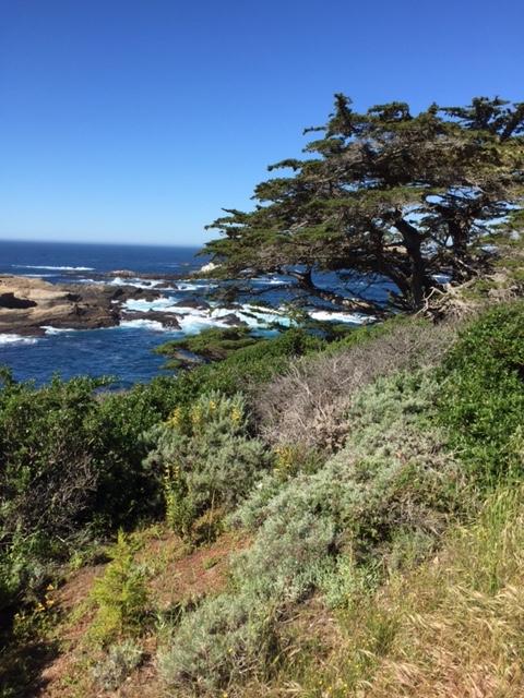 Point Lobos: Saturday hike