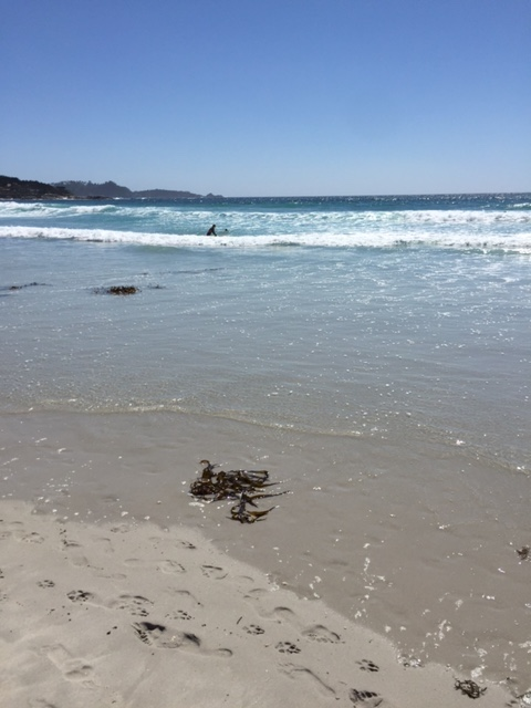 Carmel beach: barefoot walking in the sand before the race