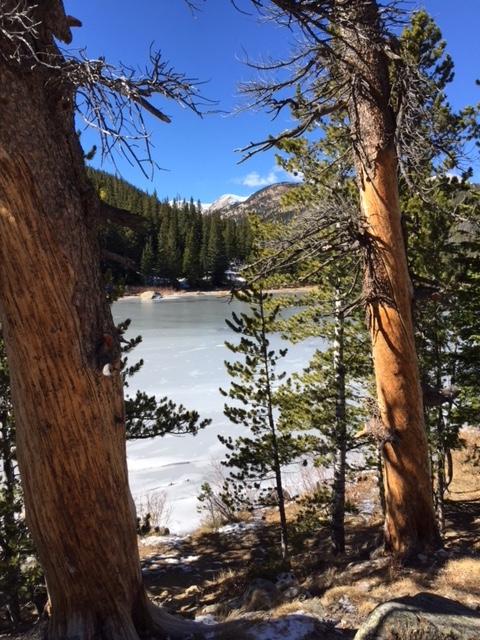 Lake view between trees.jpg