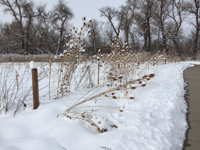 Boulder Creek Trail in late fall/early winter. A familiar running trail once I started my slow recovery.