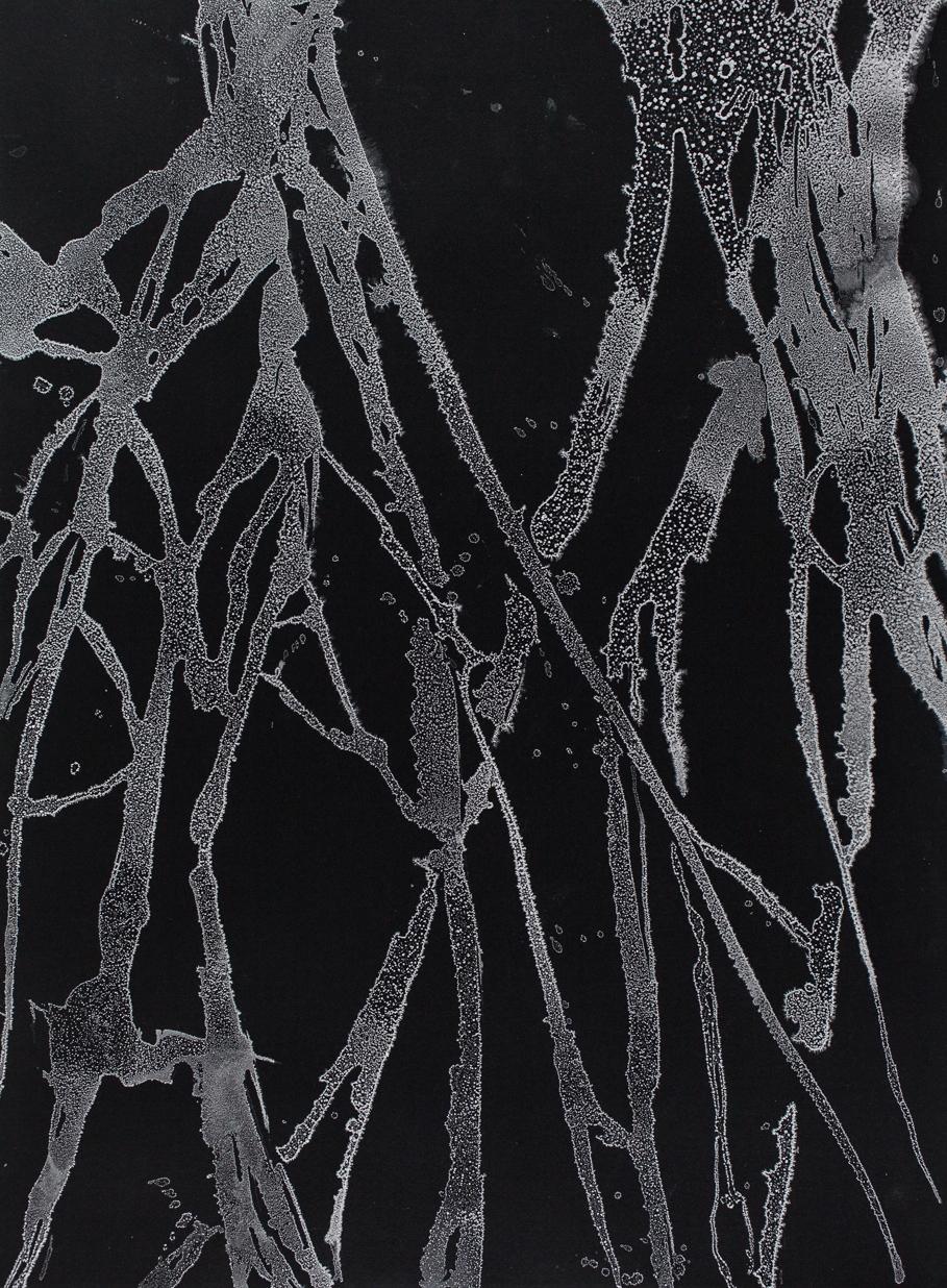 "Roots I  Sea salt crystals on paper 30"" H X 22"" W 2013"