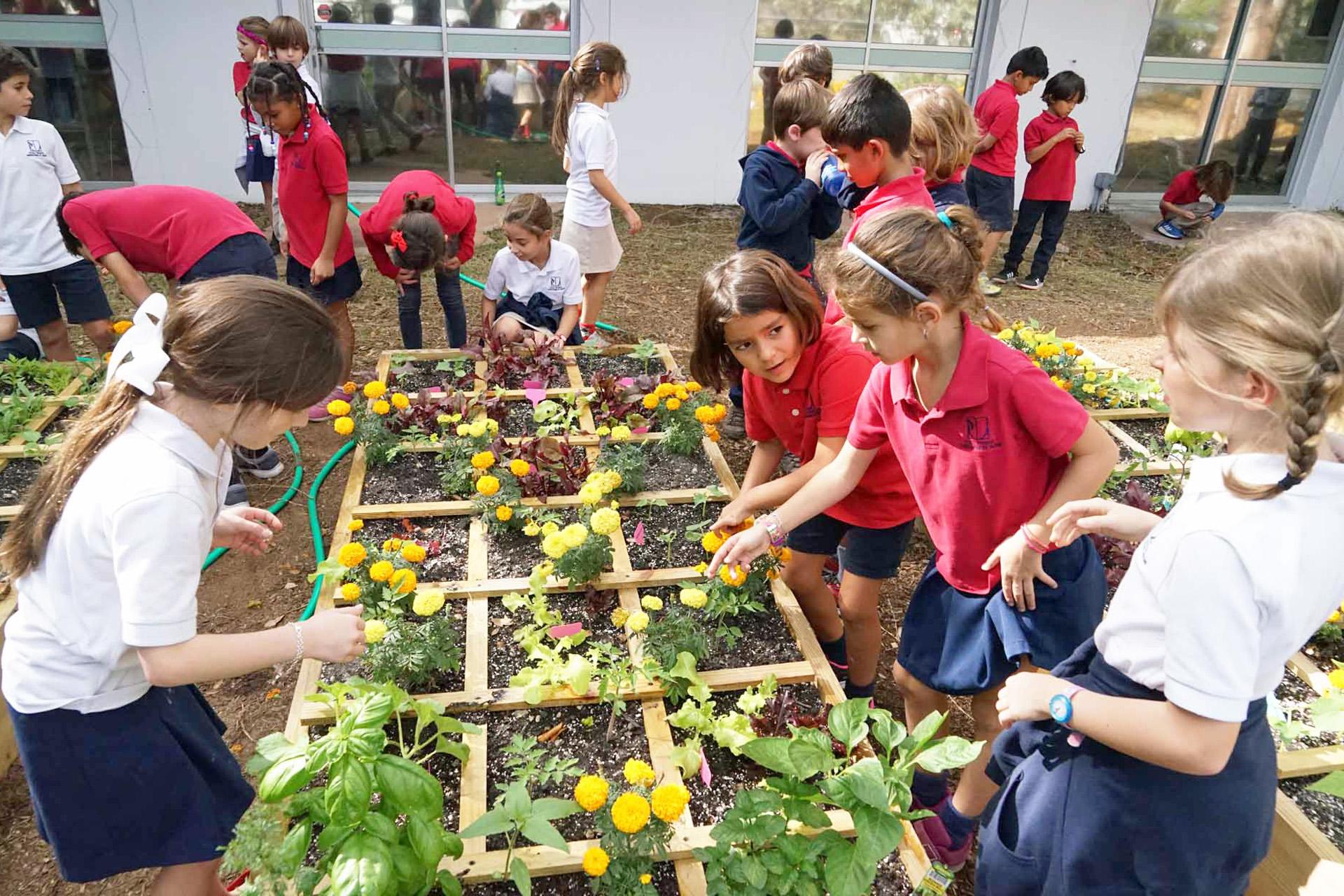 organic-garden-square-gardening-school-miami.JPG