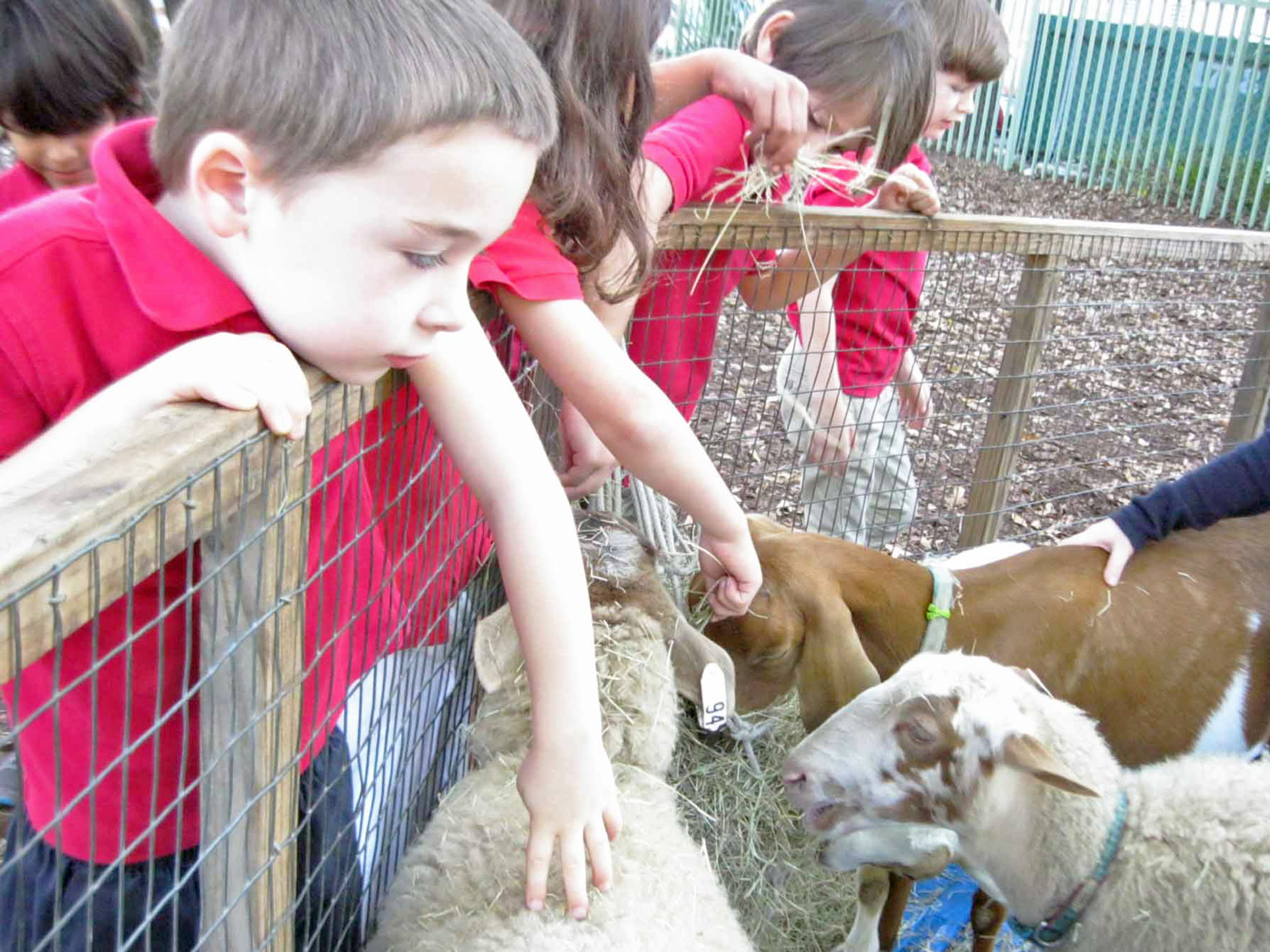 petting-zoo-french-school-miami-florida-usa-activities.JPG