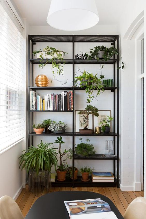 plant bookcase