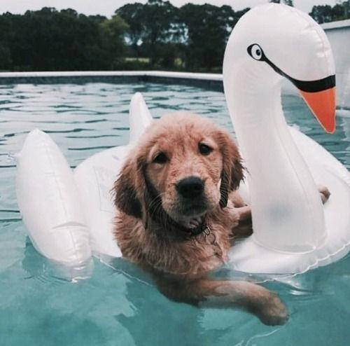 pool pup party.jpg