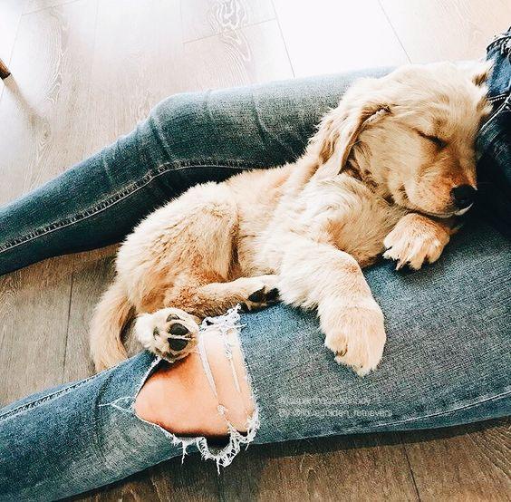 comfy pup