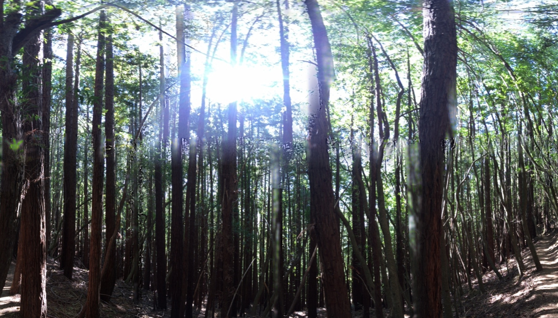The sun poking through the Muir Woods in Marin, California, while on a 7-hour prayer and fellowship hike.