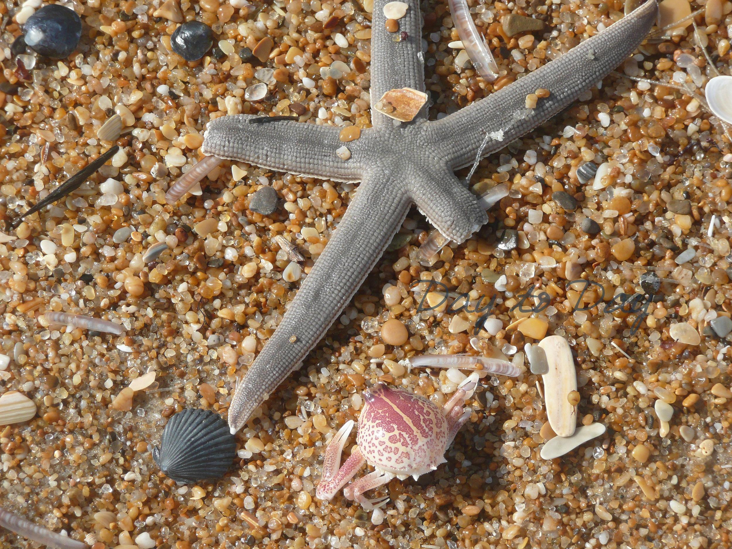 Pebbles-Starfish