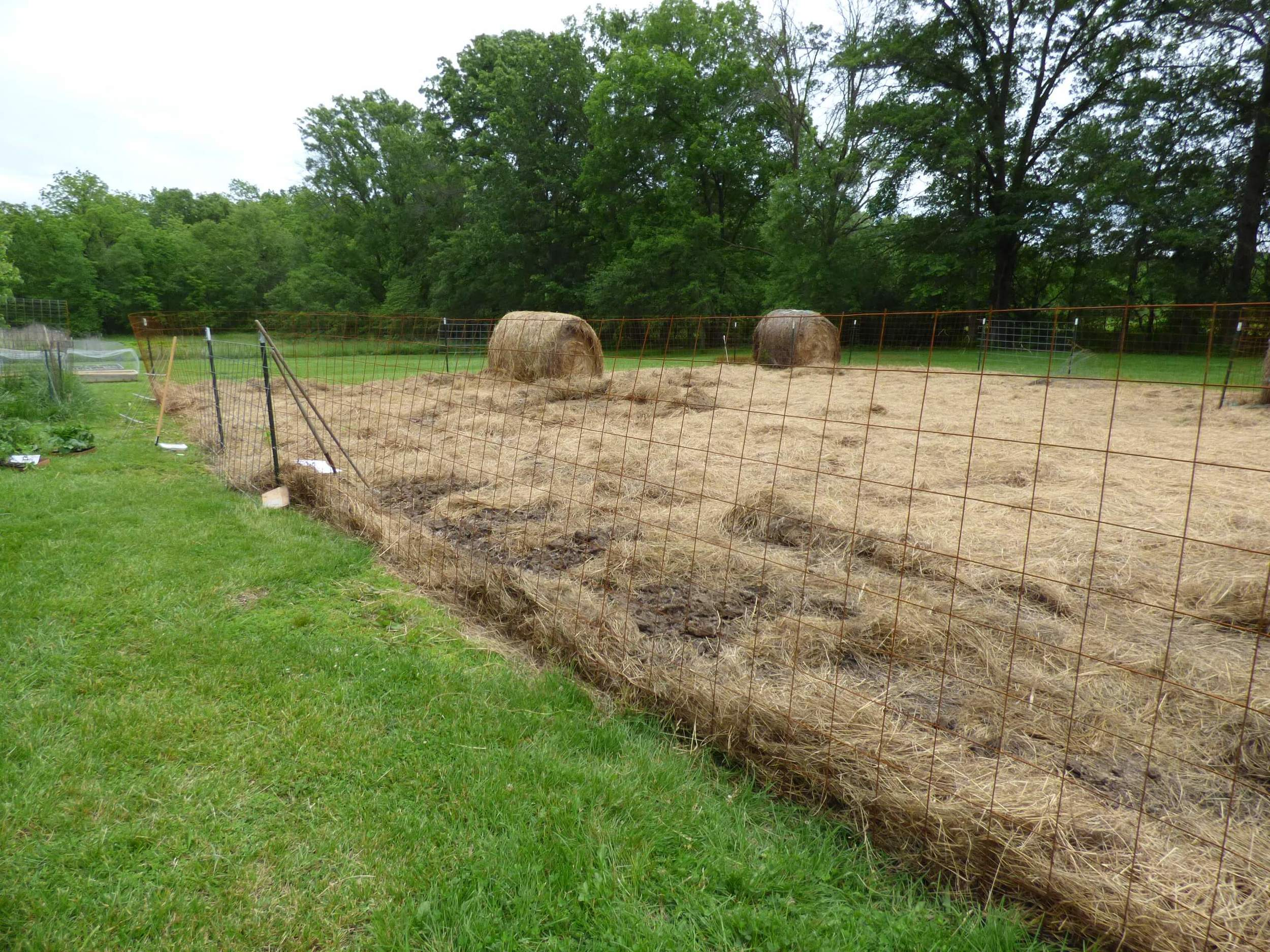 Hay in place and ground is ready for plants!