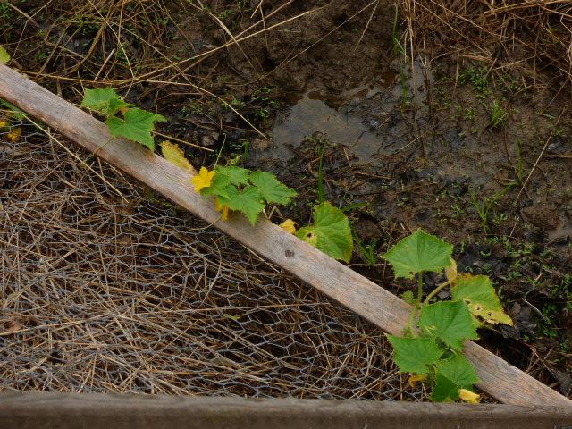 Summer Yet?  Garden Update