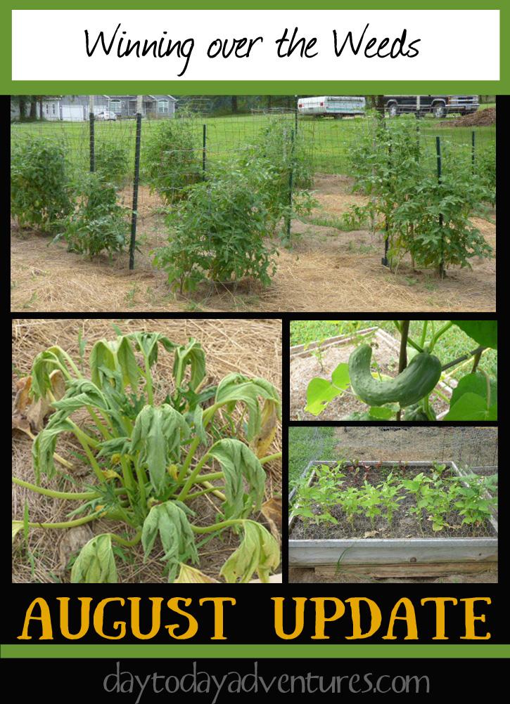 Winning over weeds by using deep mulch on the garden- DaytoDayAdventures.com