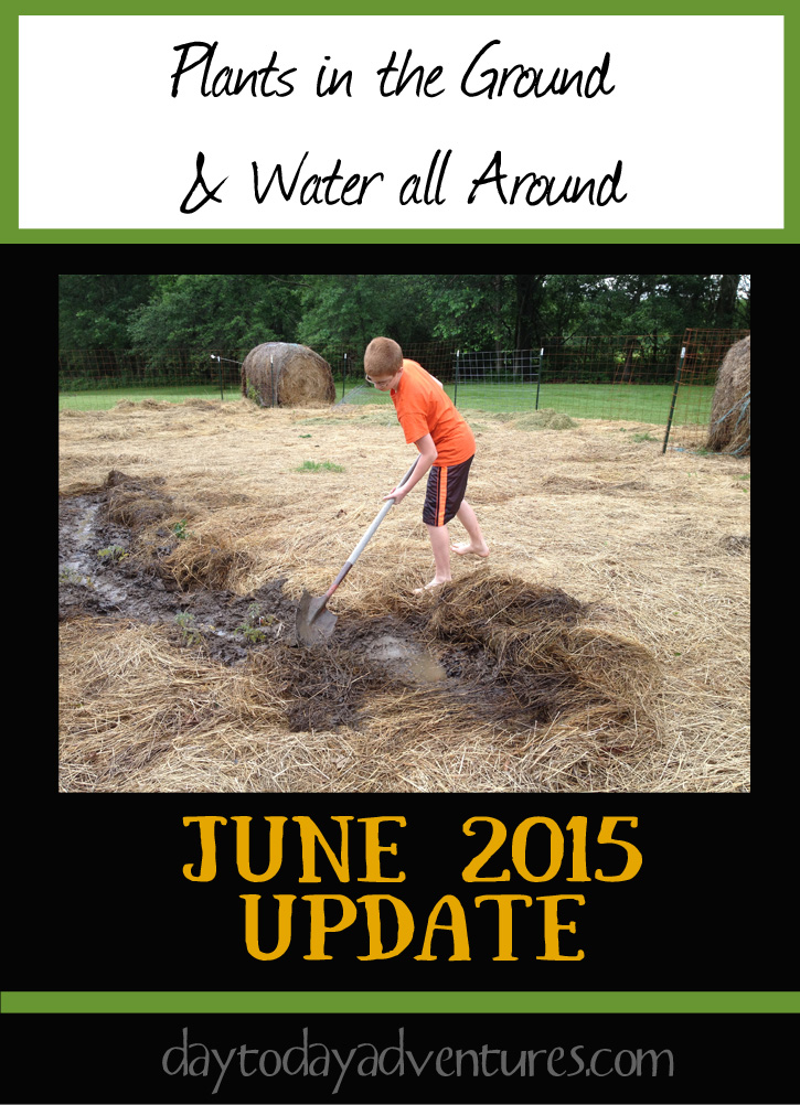 Sometimes you have to dig moats when there is water in Garden June Update - DaytoDayAdventures.com